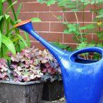 I benefici del giardinaggio nelle persone affette da Alzheimer